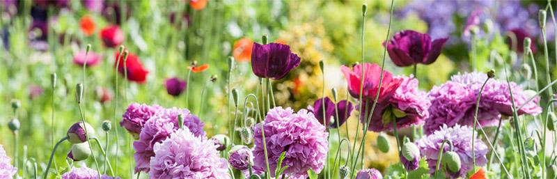 coldwell-banker-ambrosial-garden