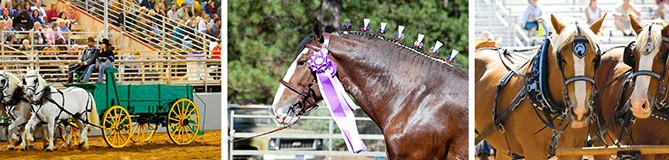 coldwell-banker-draft-horse