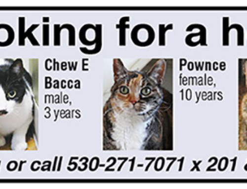 Cats for Adoption June 2019
