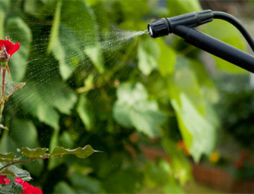 Four Simple Pesticides for Your Garden