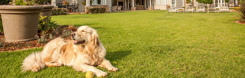 coldwell-banker-pet-proof