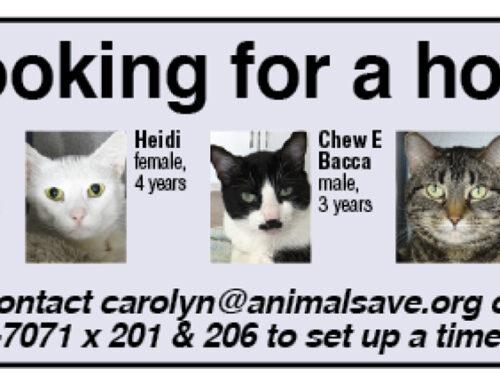 Pets for Adoption September 2019