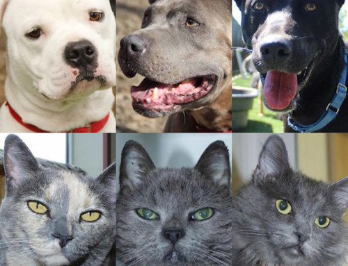 Pets for Adoption in July