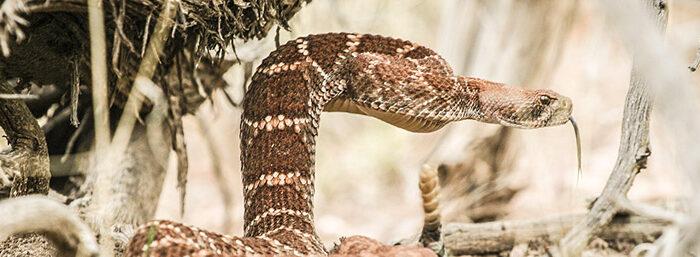 coldwell-banker-rattlesnake