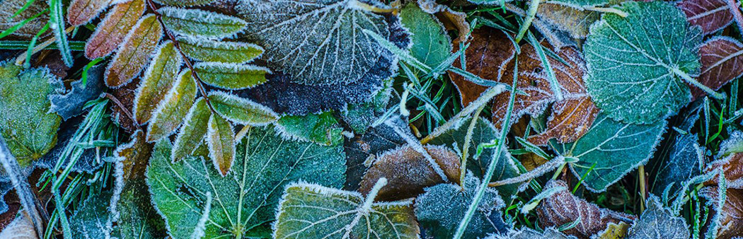 coldwell-banker-winter-lawn-care