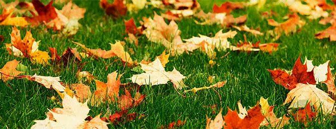 nevada-county-fall